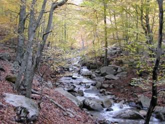 Vés a: La Diputació de Girona participa en la identificació dels boscos vulnerables al canvi climàtic al Montseny