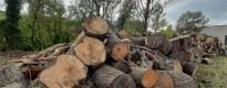 Vés a: El sector del pinyó, a l'espera d'una normativa que eviti els furts