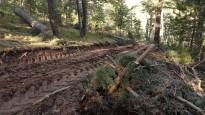 Vés a: El Consorci Forestal de Catalunya denuncia que l'Agència de Patrimoni Natural avança sense el territori
