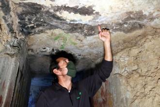Vés a: Incrementen la presència de ratpenats als boscos del Solsonès per ajudar a controlar la processionària del pi