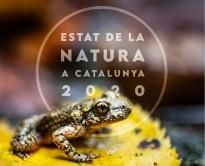 Vés a: VÍDEO Nova campanya per a conscienciar sobre l'abandonament d'animals i les adopcions