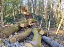 Vés a: L'ACA no veu «incidències» en la tala a la riera de Rajadell més enllà de «l'inevitable» impacte paisatgístic