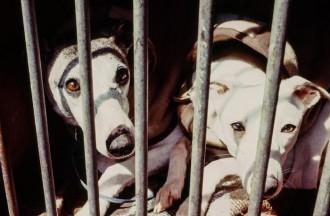 Vés a: Denuncien la Generalitat per presumpte incompliment de la protecció dels gossos dels caçadors