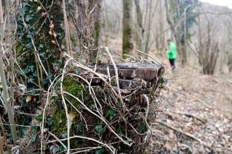 Vés a: Ribes de Freser, camp de proves per aconseguir boscos «més resistents» al canvi climàtic