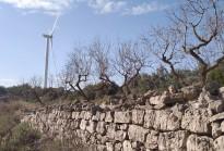 Vés a: Allau de sol·licituds per implantar parcs solars en terrenys agrícoles de l'interior del país