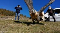 Vés a: VÍDEO Les altes temperatures posposen la hibernació dels óssos al Pirineu