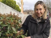 Vés a: El primer parc de tulipes de Catalunya espera obrir quan la Covid-19 ho permeti