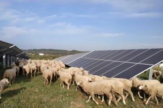 Vés a: Alternativa Verda reclama la creació d'una Vicepresidència de Transició Ecològica