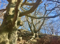 Vés a: El canvi climàtic posa en risc el conreu de la poma de Girona