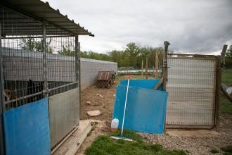 Vés a: La protectora d'animals de la Garrotxa cau a trossos per la «deixadesa» del Consell Comarcal