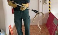 Vés a: Una serp blanca es cola a les oficines d'una empresa de Roquetes