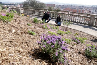 Vés a: Malgrat de Mar crea el primer bosc de papallones públic a Catalunya