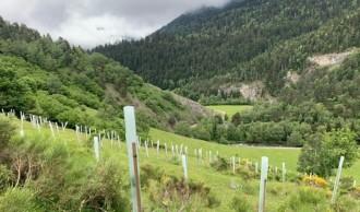Vés a: Creix la producció de fruiters per a l'ós bru al Pirineu