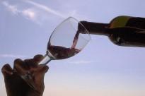 Olius organitza un curs de tast de vins