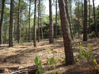 Bolets i gestió forestal