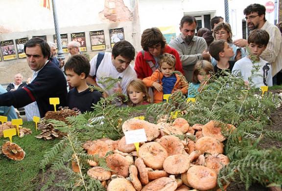 La Festa del Bolet de Seva posa a la cassola 2.000 racions de tastets