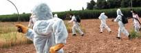 Vés a: Brasil està a punt d'alliberar al medi uns mosquits transgènics