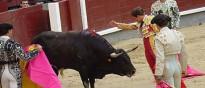 Vés a: Recta final per fer tornar els toros