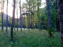 Vés a: El CTFC i Agricultura impulsen el mercat forestal al Pirineu