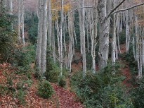 Vés a: El  patrimoni  forestal  de  la  Garrotxa i  la  responsabilitat col·lectiva