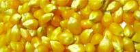Vés a: La mel de l'Estat espanyol no es pot exportar per causa dels transgènics