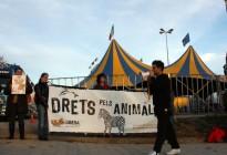Vés a: La decisió que Girona aculli el Festival de Circ Elefant d'Or topa amb la CUP i ERC en contra