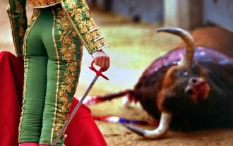 Vés a: Llum verd a la llei que ha de fer tornar els toros a Catalunya
