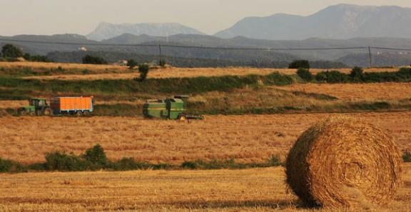 Una política agrària pròpia per millorar la renda pagesa
