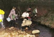 Eliminats 560 crancs exòtics del Montseny i les Guilleries