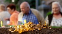La Festa del Bolet de Seva torna a batre registres històrics de visitants