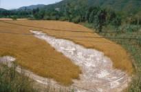 Vés a: Cal destinar aigua del Llobregat per dissoldre sal?