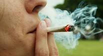 Vés a: CiU i ERC negocien al Parlament la regulació del cànnabis