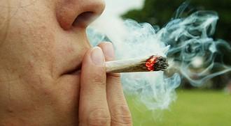 Vés a: El consum regular de cànnabis té efectes adversos sobre la fertilitat