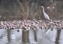 Vés a: Si els ocells arriben al capdavall de la Tordera, ja és primavera