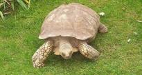 Vés a: La tortuga marina, amb problemes al litoral català
