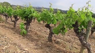 Vés a: Jornada sobre canvi climàtic i cultiu de la vinya a Barberà de la Conca
