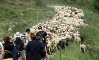Unió de Pagesos denuncia mala gestió en la malaltia de la llengua blava