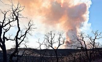 El foc de l'Alt Empordà ha afectat vinyes a Capmany i Agullana