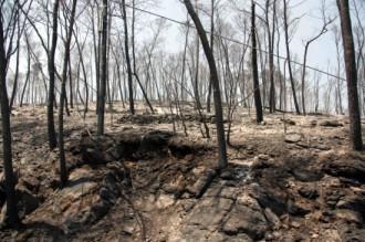 Recomanen no replantar els arbres de la zona cremada de l'Alt Empordà