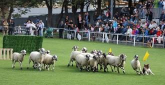 Ribes celebra aquest diumenge el concurs de gossos d'atura