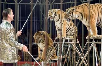 Vés a: El Parlament aprova prohibir l'ús d'animals salvatges al circ