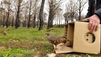Vés a: El Projecte Sèpia cerca millorar la població de cefalòpedes a l'Empordà