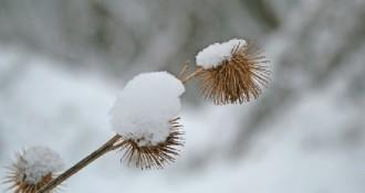 Canvi de temps amb nevades, pluja i fred a partir de demà