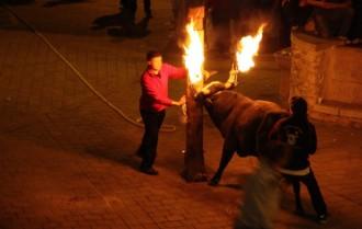 Cultura inicia la catalogació dels bous i en valorarà la declaració honorífica