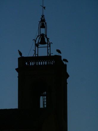 Cigonyes al campanar de Tona