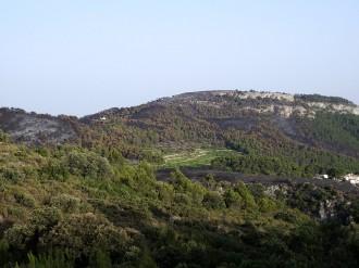 Vés a: L'extracció de fusta a Mariola causa un impacte forestal greu