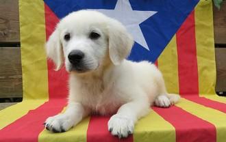 Ara, una Via Catalana de mascotes amb estelades al Facebook