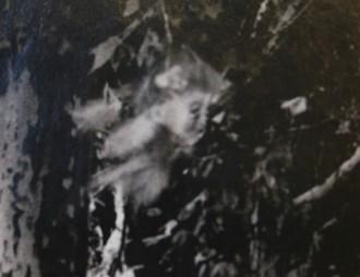 Els experts estudien la foto d'un follet en un bosc de Centelles