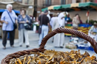 Un 77% dels catalans acceptaria pagar per buscar bolets