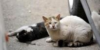 Almoster decideix suspendre la captura de gats de carrer